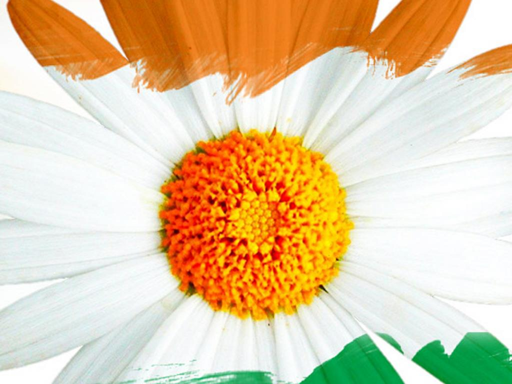 Flower With Indian Flag Hd: India Flag For Mobile Phone Wallpaper 15 Of 17