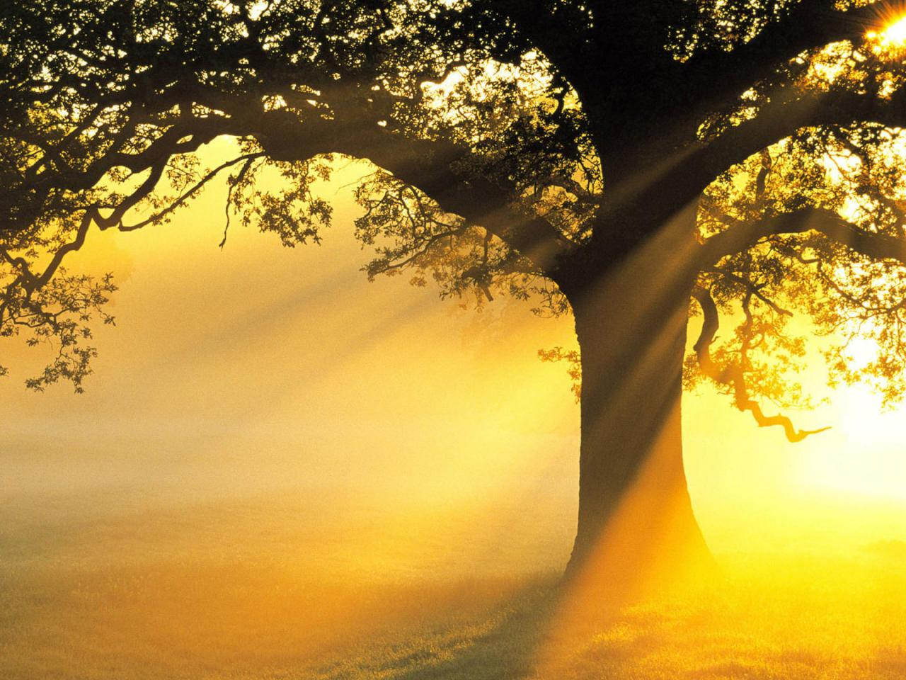 Nature Images Hd Big Tree In Morning Hd Wallpapers