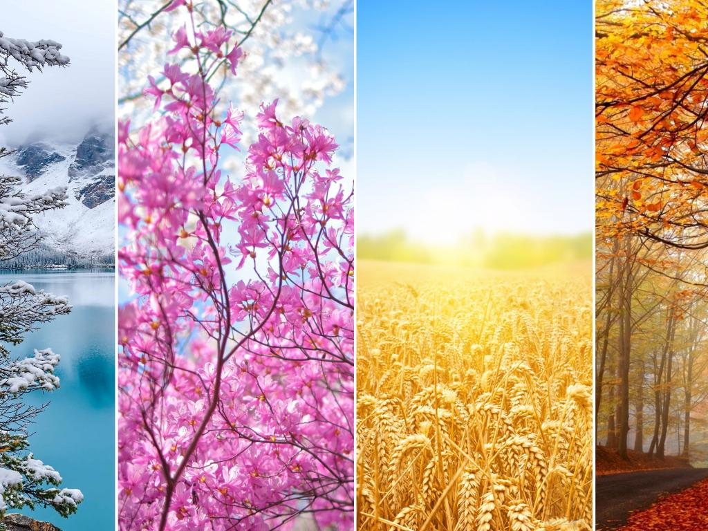 Picture Of 4 Seasons Wallpaper In 4k Resolution Hd Wallpapers Wallpapers Download High