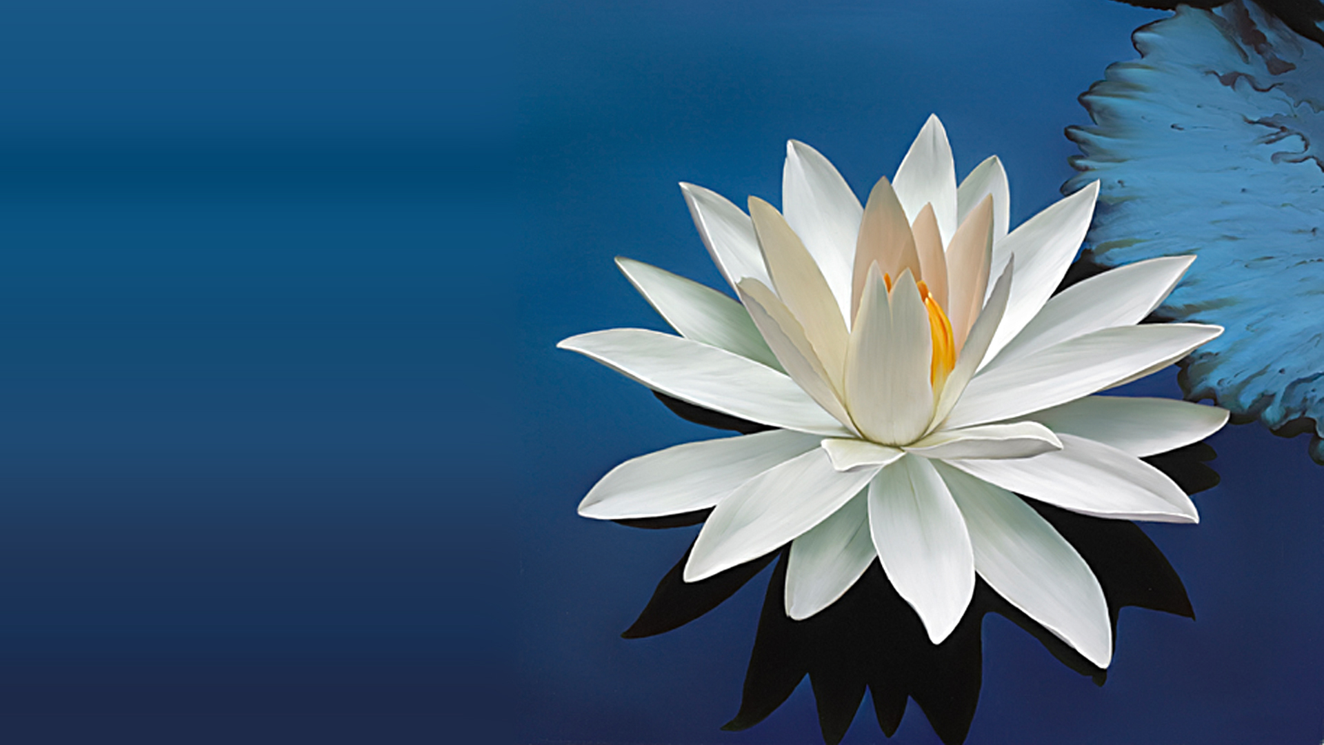 Nature wallpaper with beautiful white lotus flower hd wallpapers available downloads izmirmasajfo