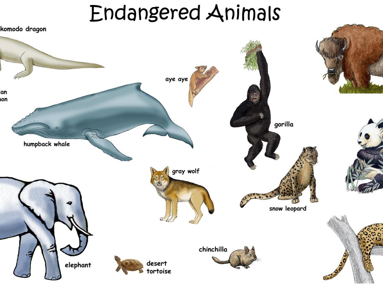picture of endangered animals with names for kids hd wallpapers