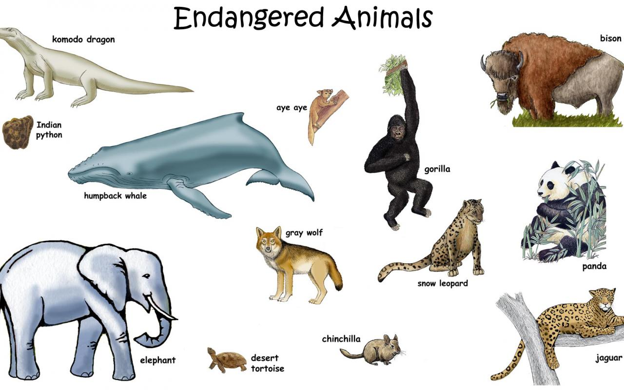 the extinction of animals Concerned groups and governments are trying to save these endangered species through breeding and preserving their habitat – but these are all temporary solutions what we need to do is to address the root causes of extinction of species extinctions have happened several times in our geological.