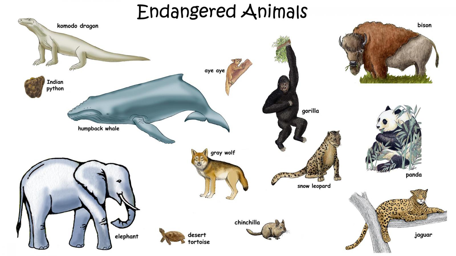 ... Picture of Endangered Animals Picture of Endangered Animals with Names