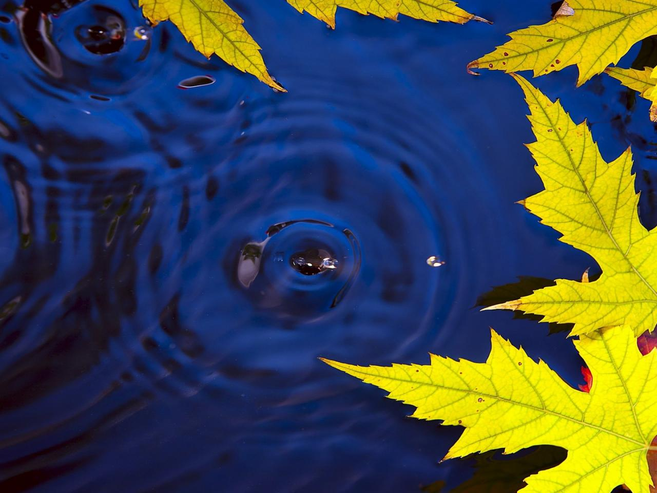 autumn leaves on water live wallpaper in hd hd