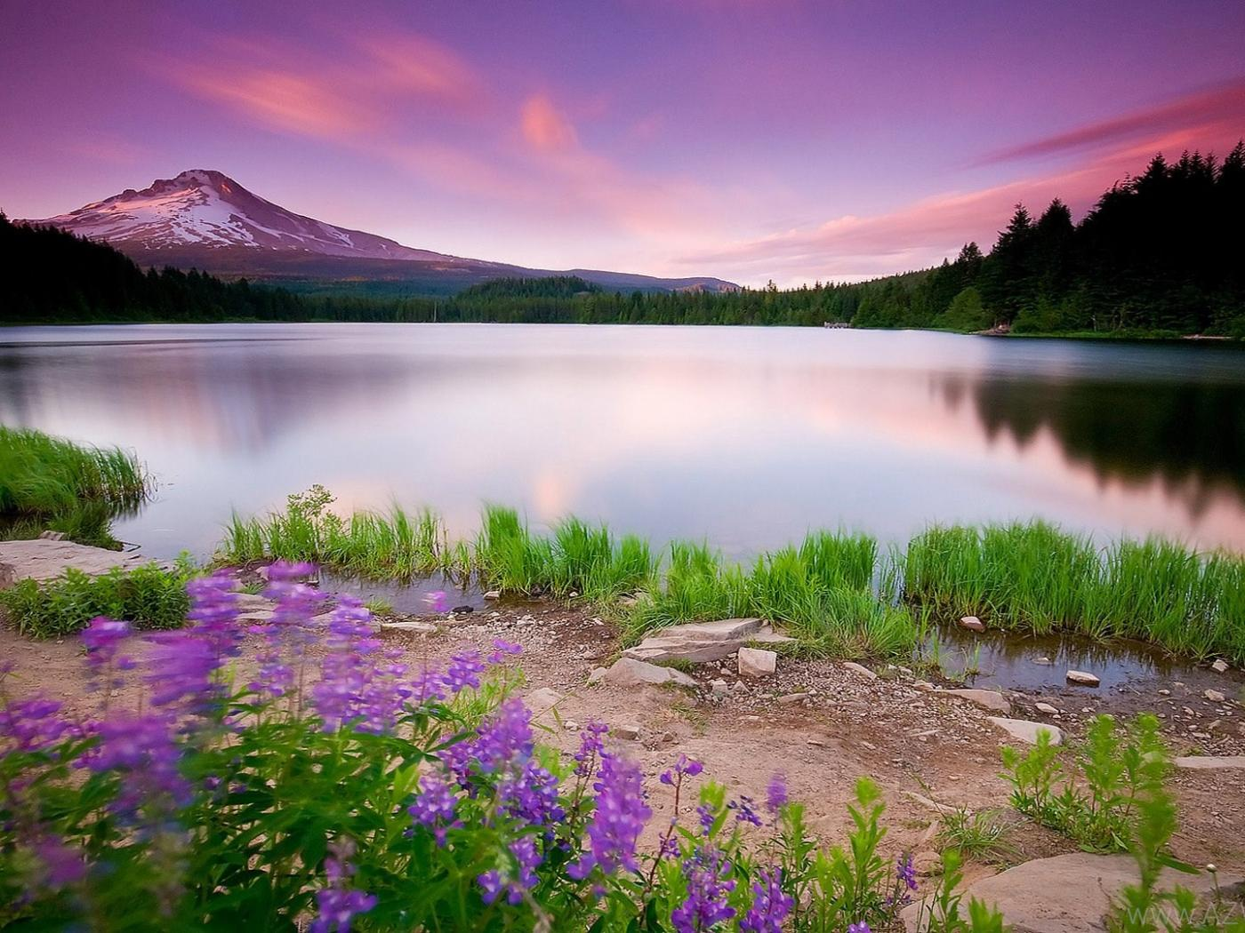 Widescreen Hd Nature Wallpaper In 1080p Size With Purple