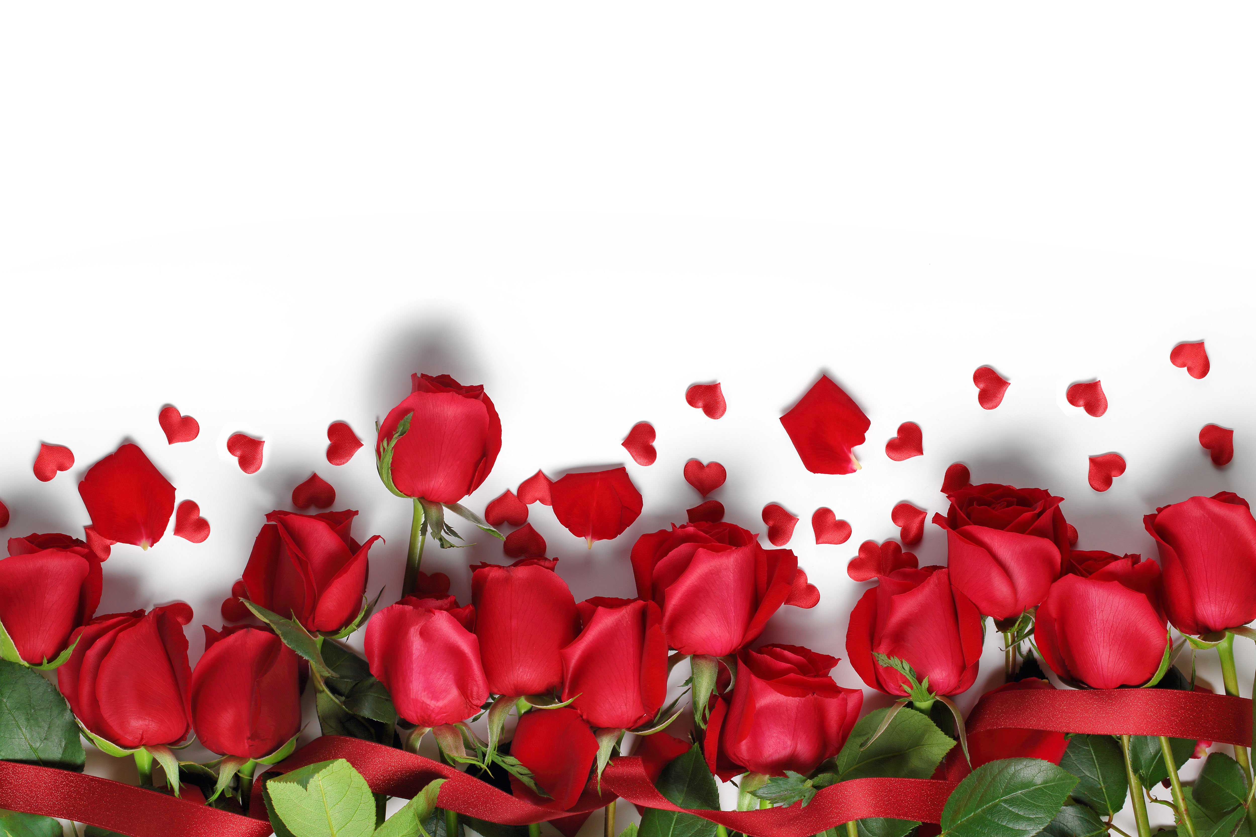 Red flowers hd nature wallpaper with rose picture hd wallpapers rose flower wallpapers pictures of red roses with white background mightylinksfo