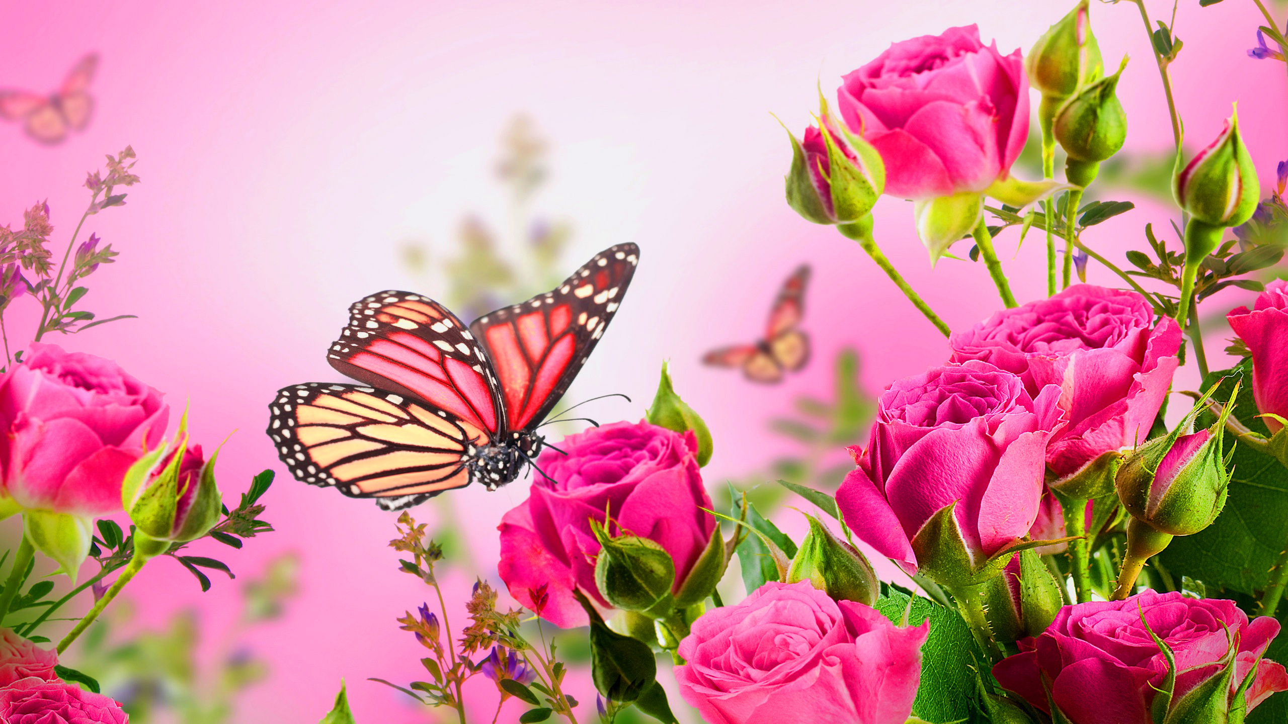 Must see Wallpaper High Resolution Butterfly - High_Resolution_Pictures_of_Rose_Flowers_and_Butterfly_for_Wallpaper  Photograph_69333.jpg
