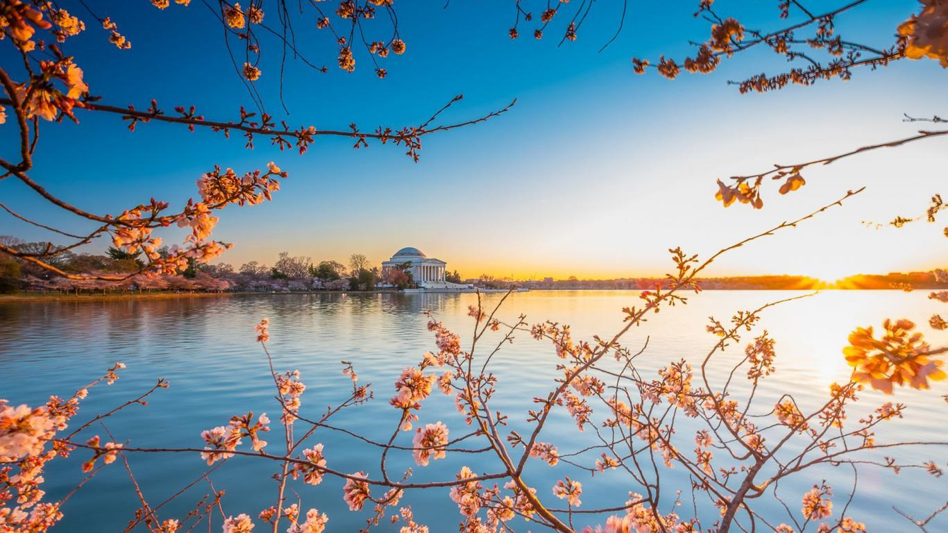 Natural images hd 1080p download with early cherry blossoms at the tidal basin hd wallpapers - Hd images download ...