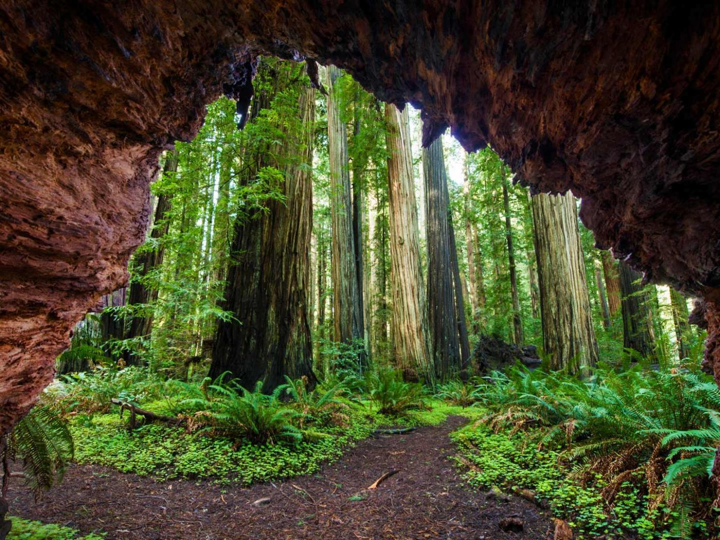 Natural Images Hd 1080p Download With Redwood Trees At