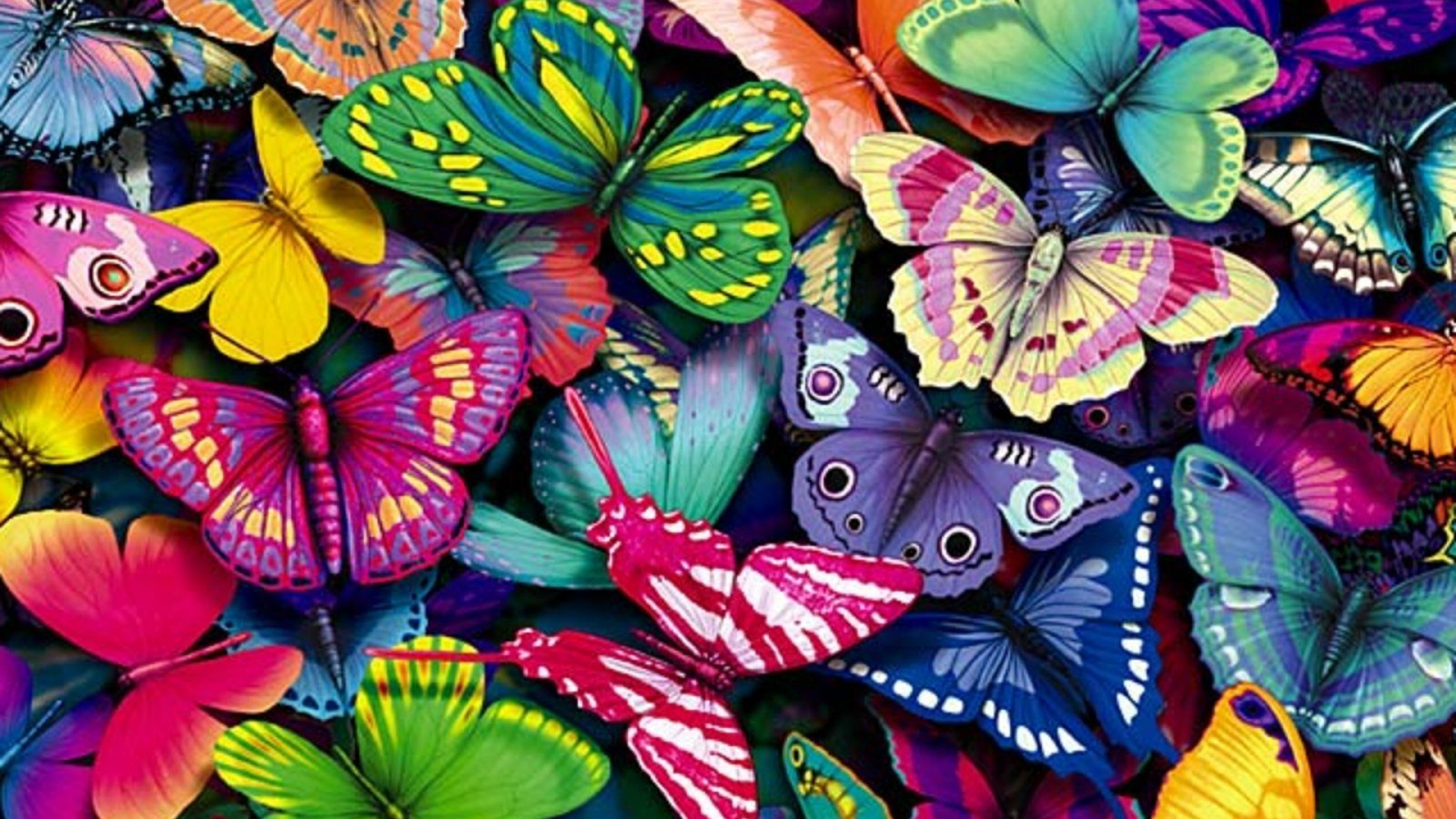 Cool Wallpapers HD with Colorful Butterfly in Cartoon - HD ... - photo#3