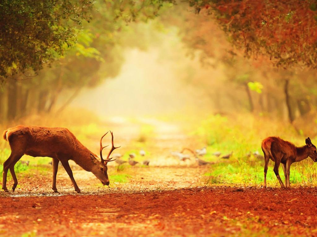 High Resolution Nature Pictures with A Couple of Deer in ...