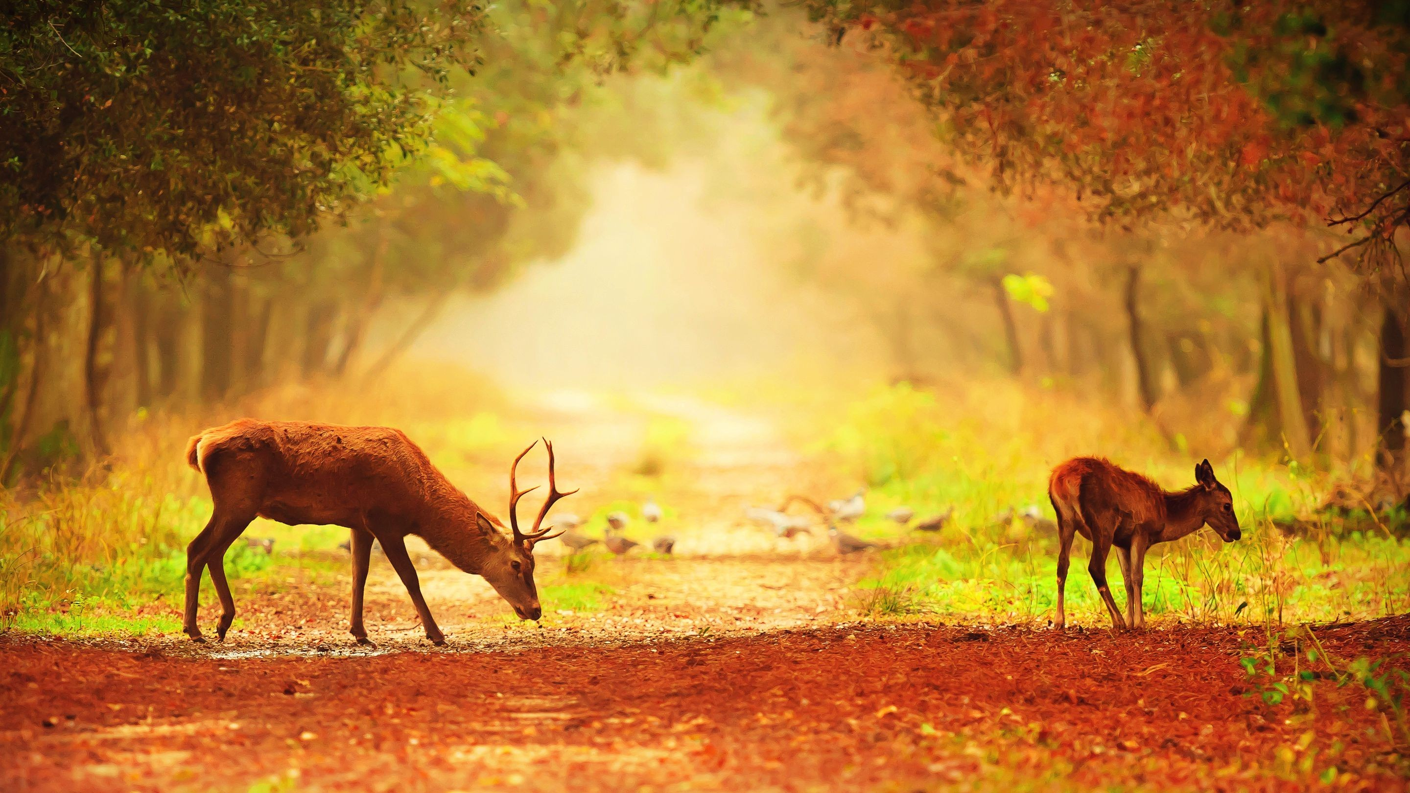 High Resolution Nature Pictures With A Couple Of Deer In