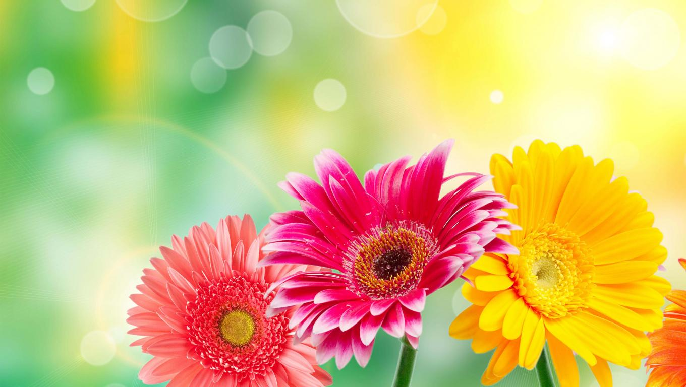 Free Colorful Flower Wallpaper Downloads: High Resolution Flower Images For Wallpaper