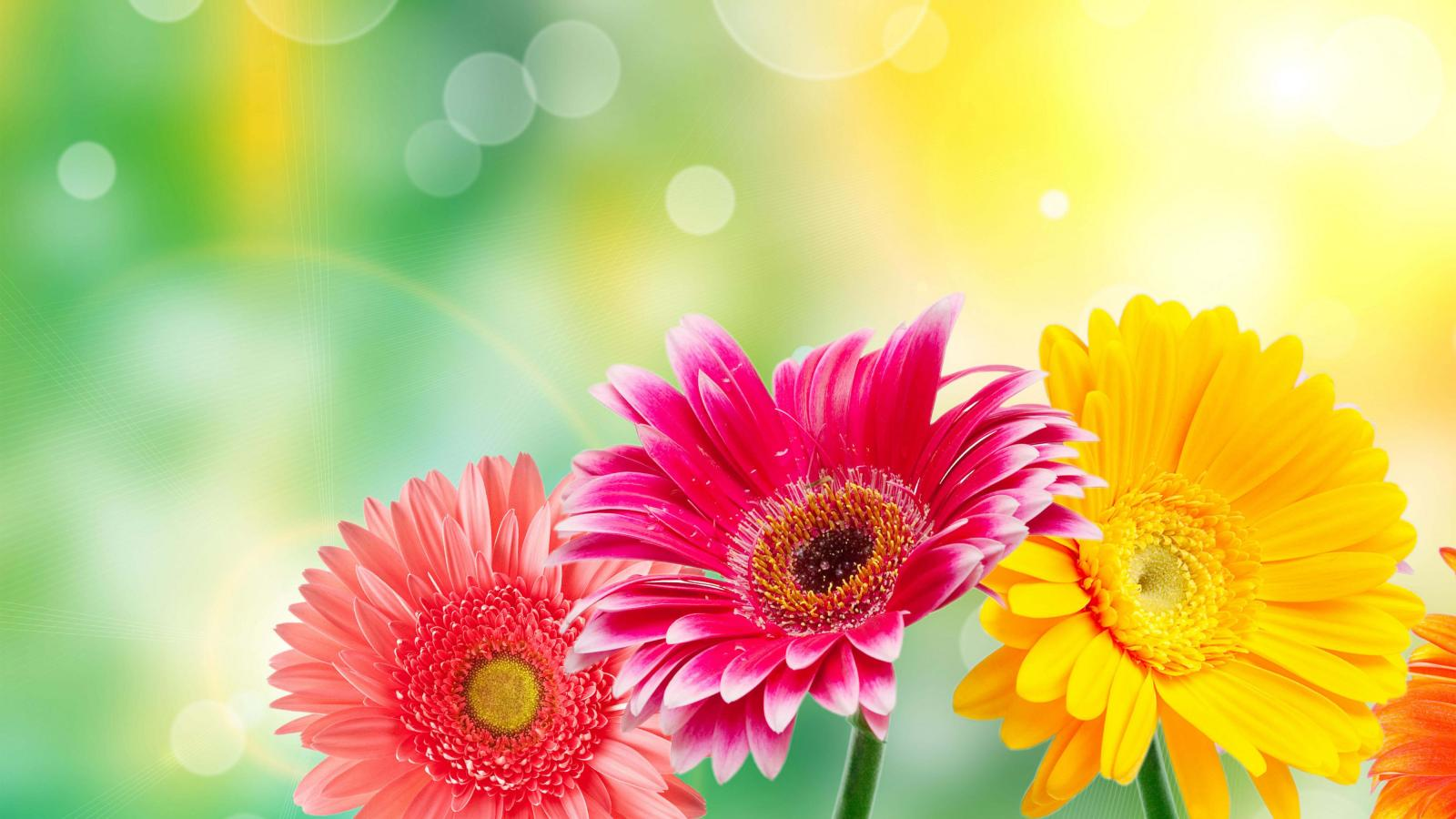 High Resolution Flower Wallpaper: High Resolution Flower Images For Wallpaper