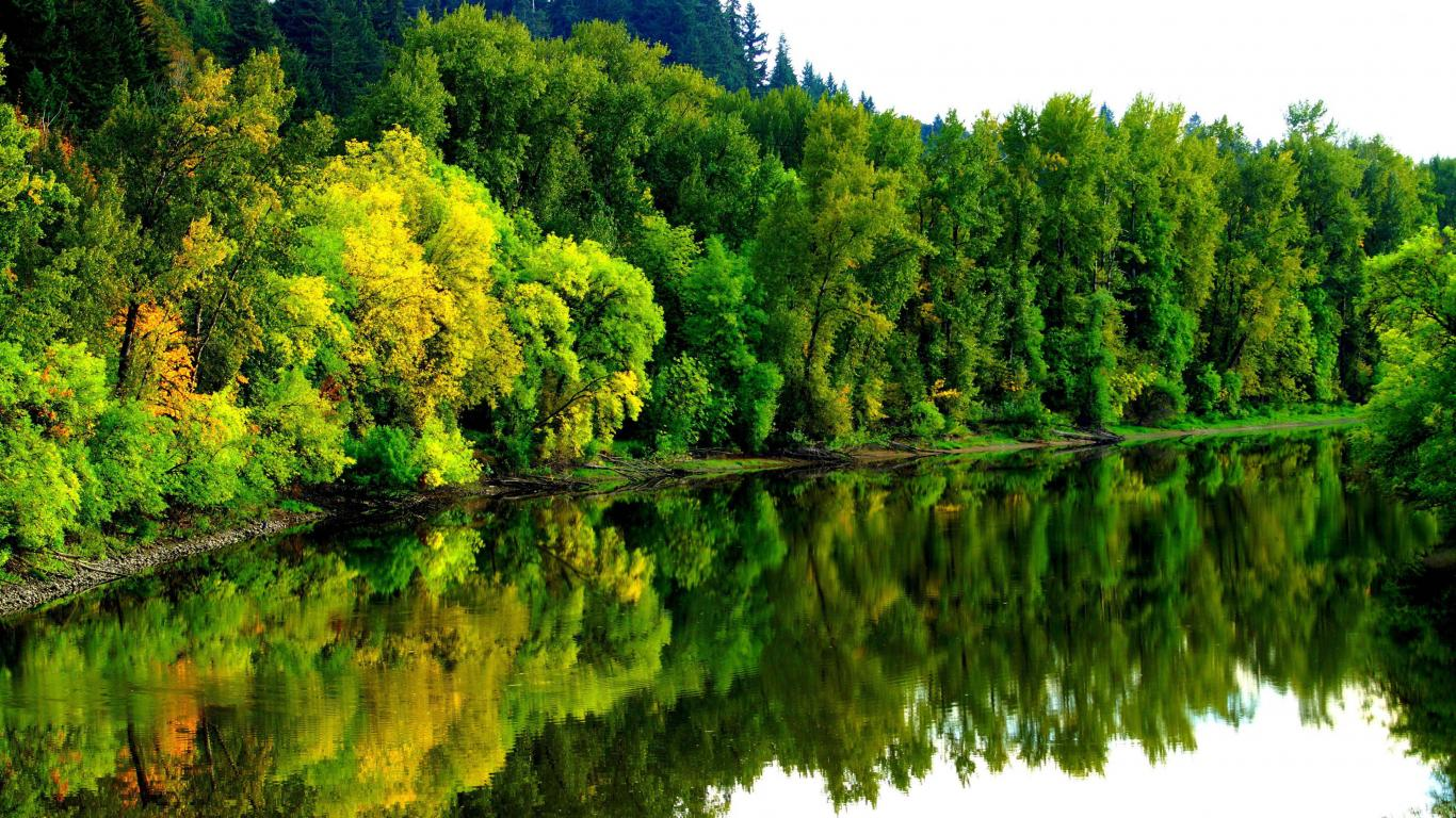 4k wallpapers with jungle and river pictures free hd - 4k forest wallpaper ...