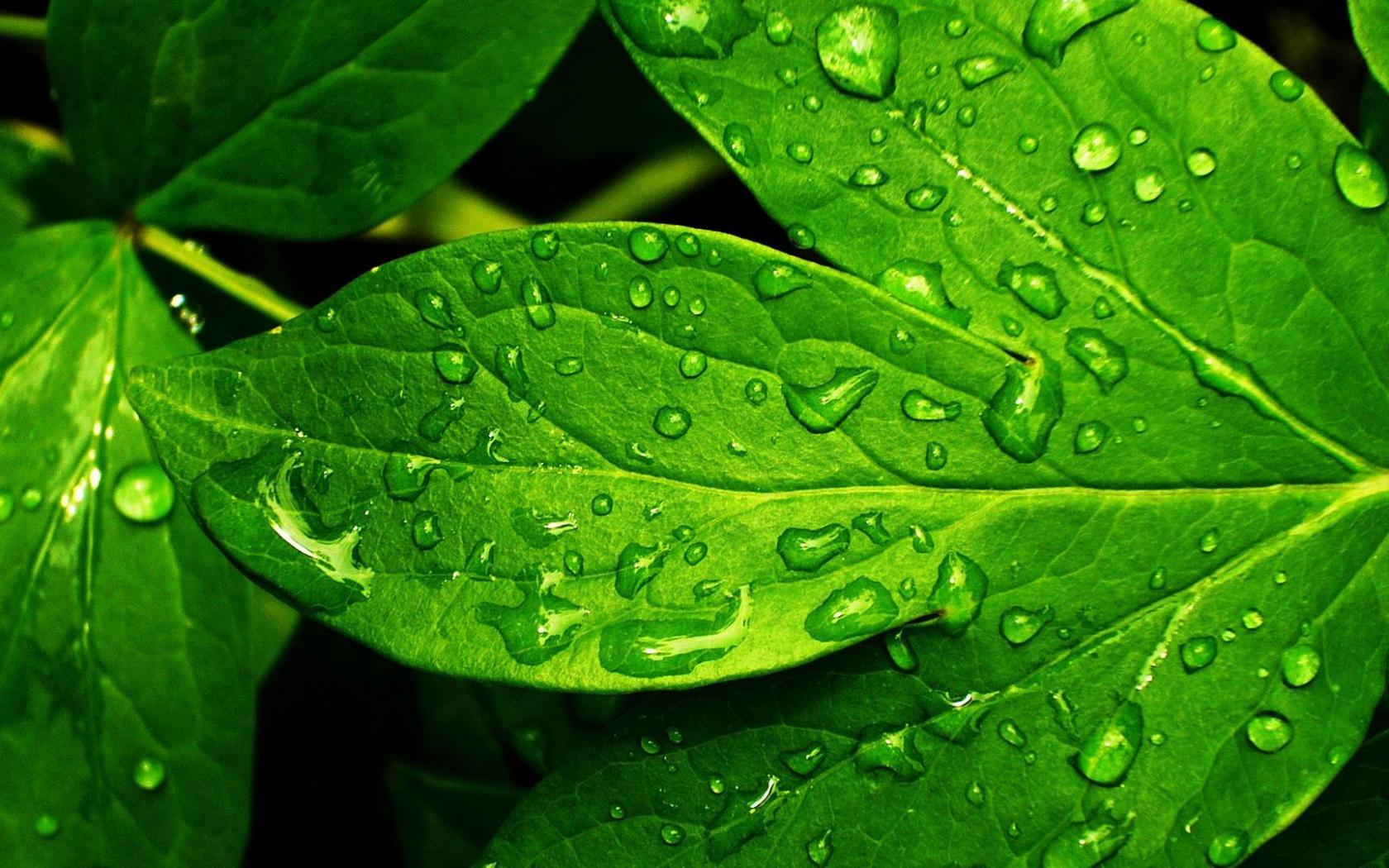 HD Picture Nature with Stunning Green Wet Leaf | HD ...
