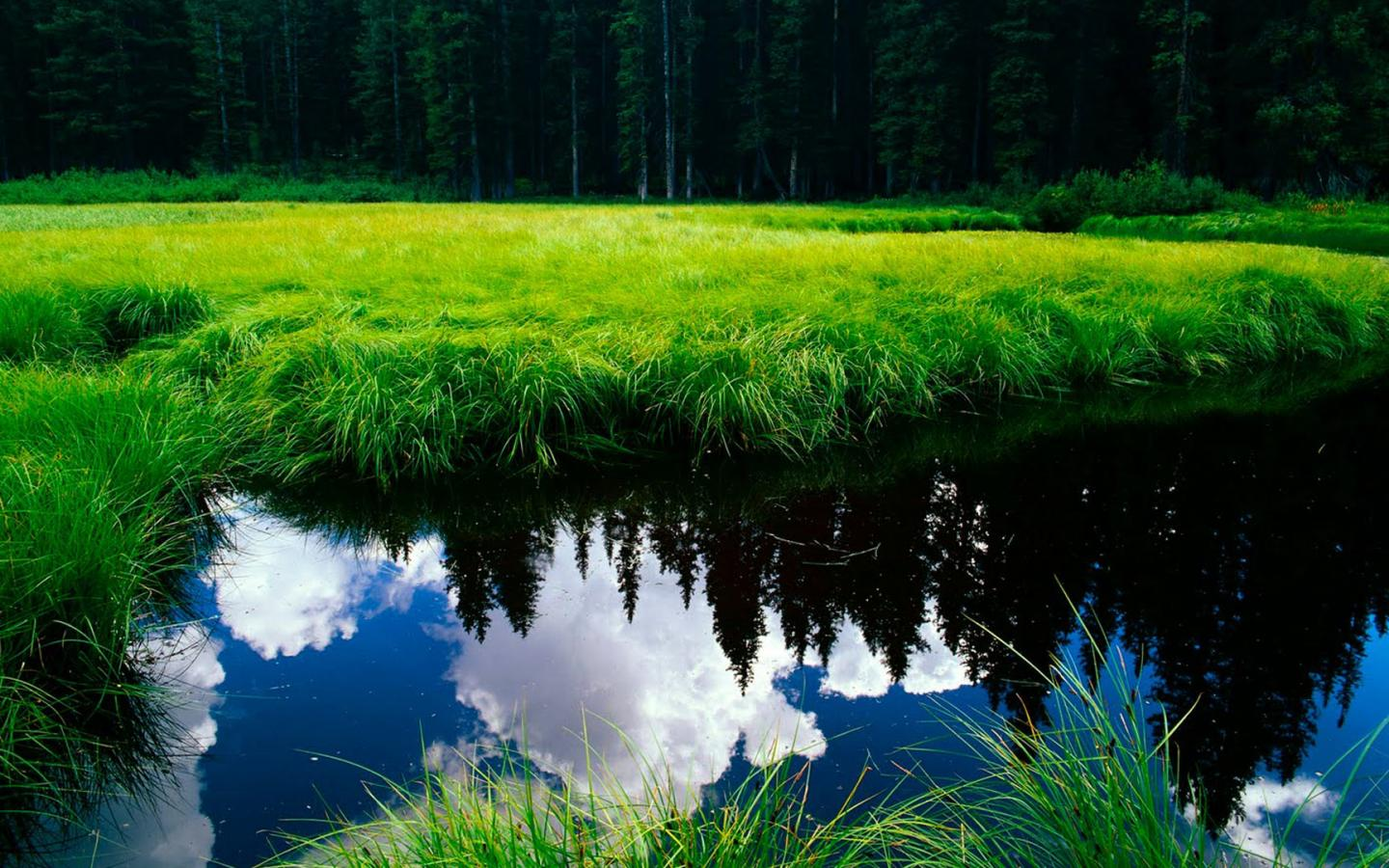 Wallpaper HD Nature 1080p With Green Grass And Clean Water