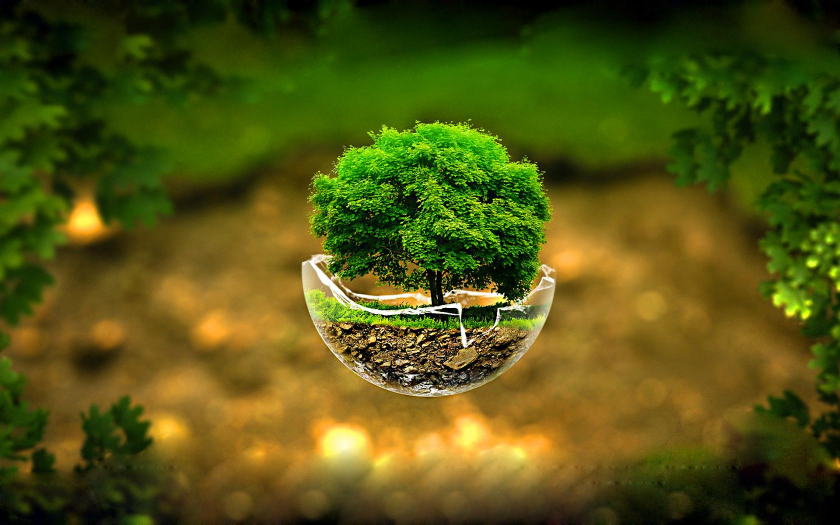 3d nature images hd with flying tree on broken glass hd wallpapers wallpapers download - Hd images download ...