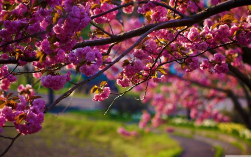 Nature wallpaper with spring flowers hd wallpapers wallpapers free download of nature wallpaper with spring flowers mightylinksfo