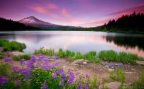 Beautiful nature wallpaper in 1080p Full HD size with purple views