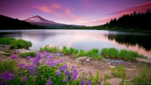 Picture of Widescreen HD Nature Wallpaper in 1080P Size with Purple Views