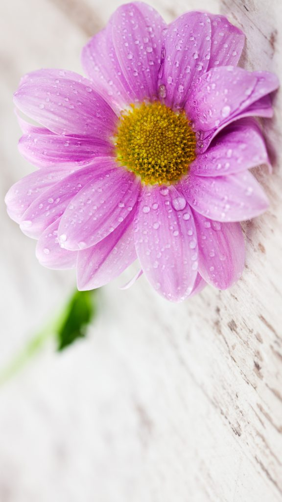 Flower wallpapers for mobile hd