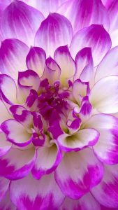 Flower wallpapers for android mobile with 1440x2560 for LG G3