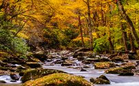 Nature Picture of Autumn Forest in the Great Smoky mountain National Park for Mobile Phones Wallpaper