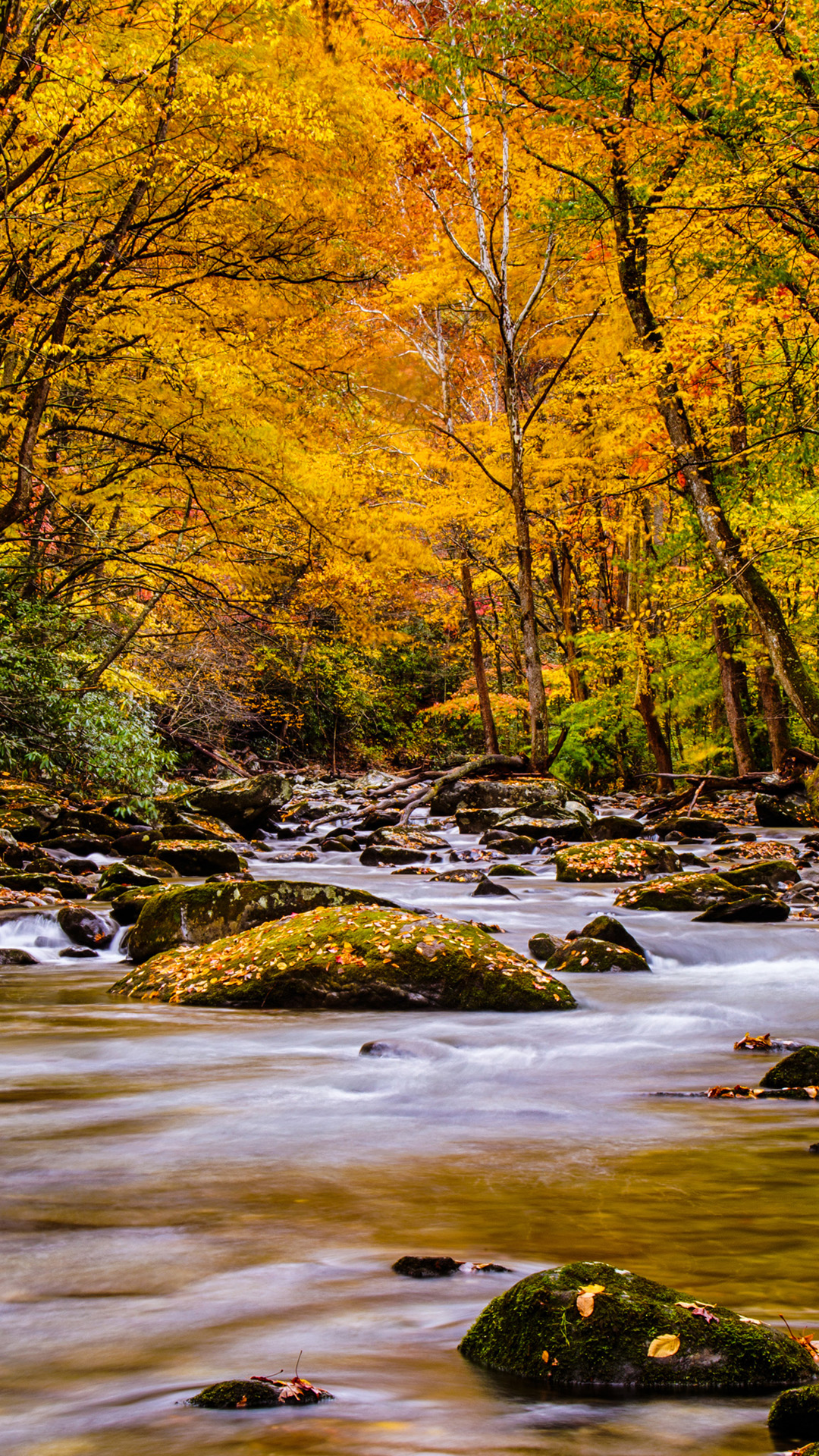 Nature Picture Of Autumn Forest In The Great Smoky Mountain National Park For Mobile Phones