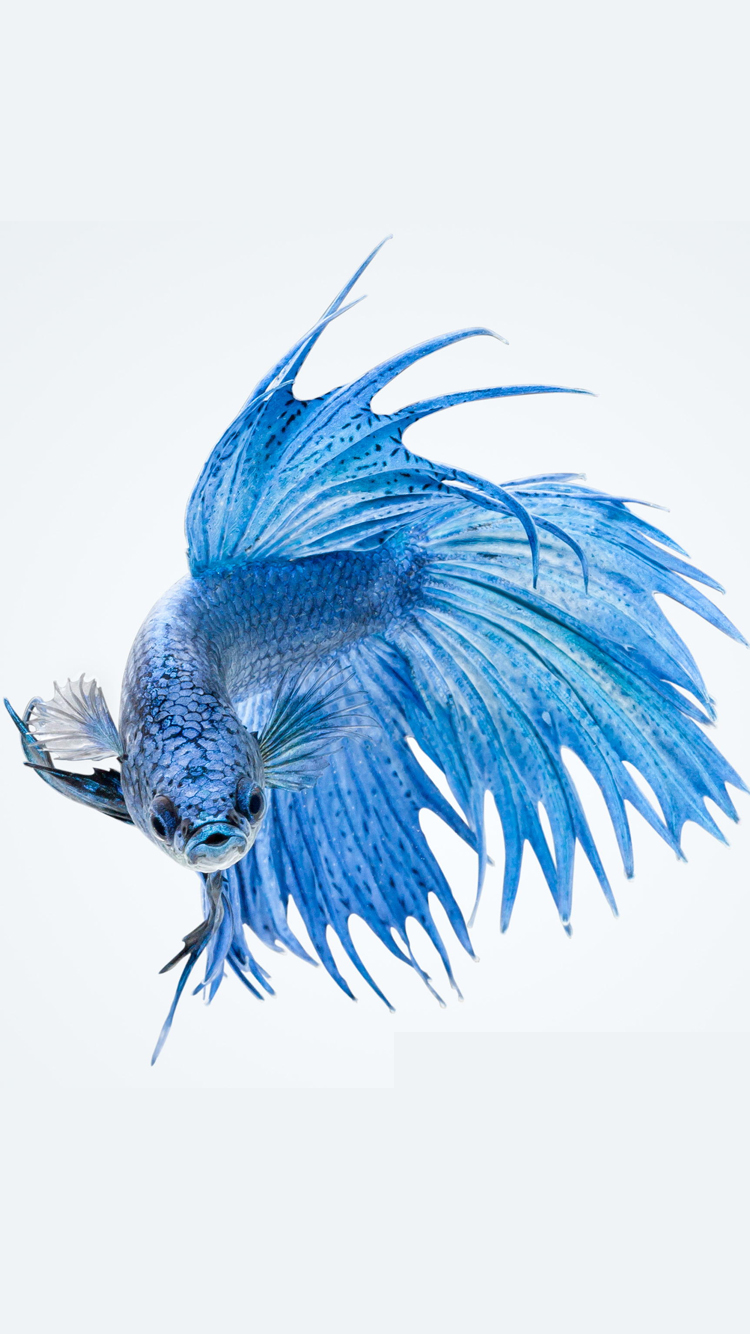 325 Amazing Blue Images  Pexels  Free Stock Photos