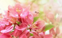 Attachment picture for Flower Desktop Background Pictures in Pink with HD