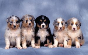 Cute Animals wallpaper with photo of Cutest Dog Puppies