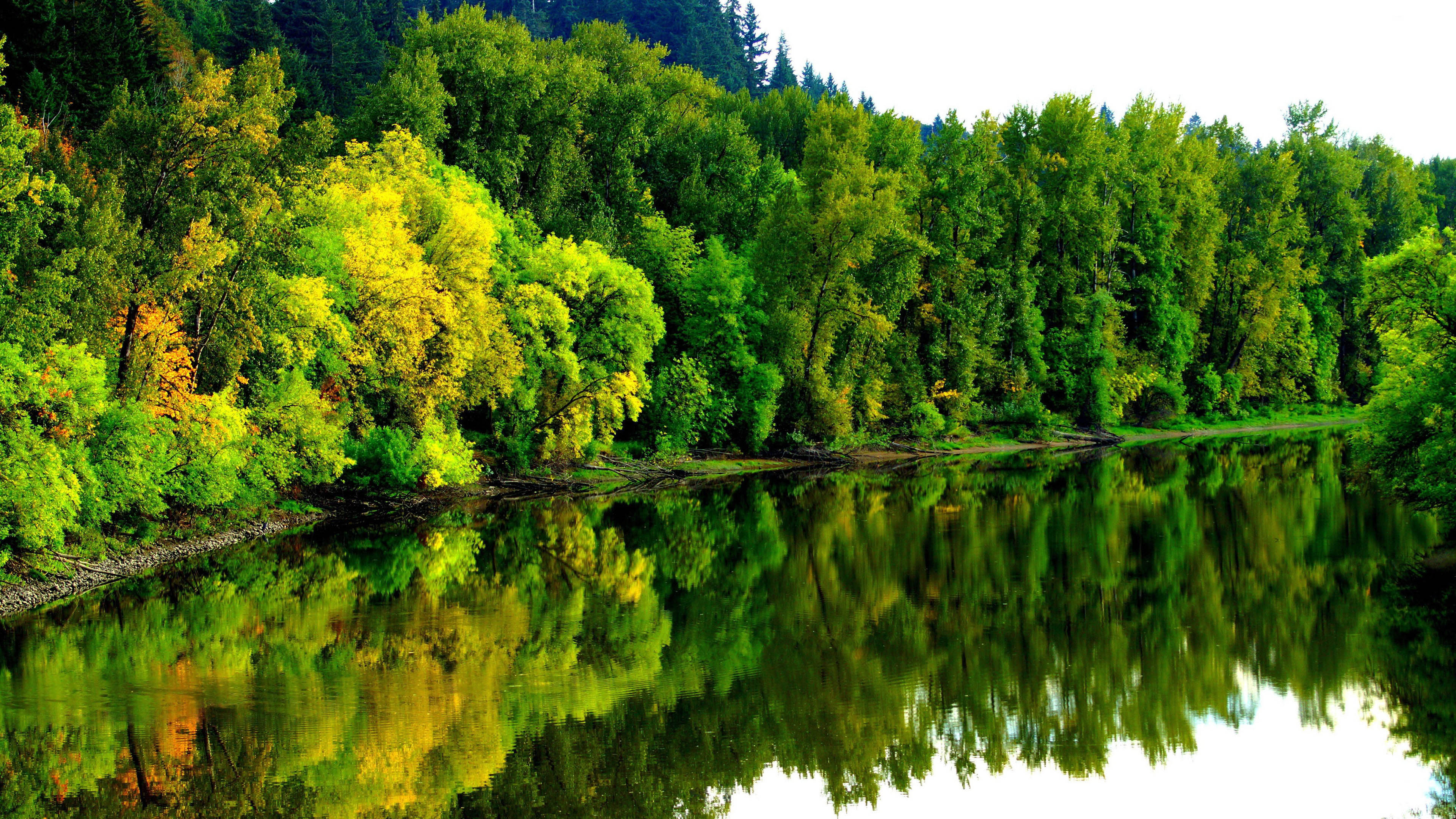 4K Wallpapers with Jungle and River Pictures Free | HD ...