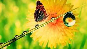 Attachment file of Butterfly Water Drops Free Wallpapers in macro photo