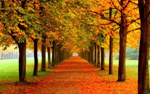 Attachment for Free Nature Wallpaper with Autumn leaves and straight street