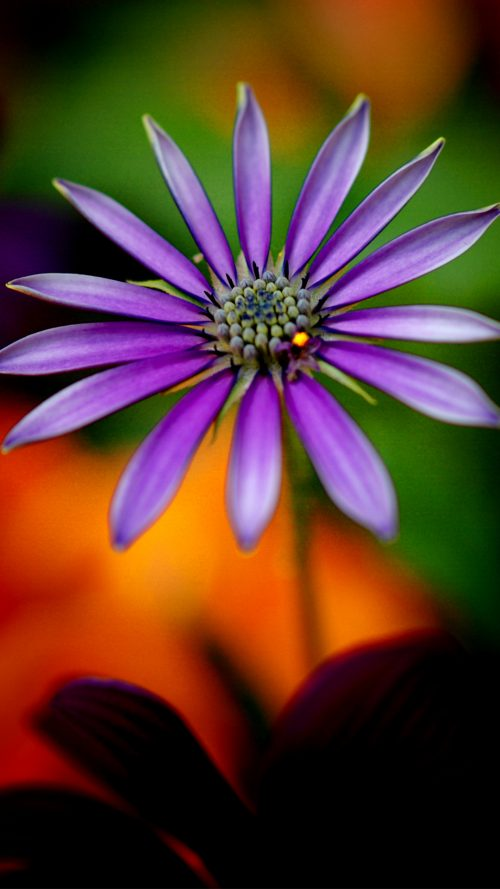Full HD wallpapers 1080p for mobile with purple flower