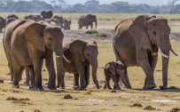 Picture of 20 High Resolution Elephant Pictures No 3 African Elephants Family