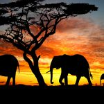 Picture of 20 high resolution elephant pictures - No 1 - Three Elephants Silhouette