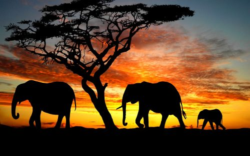 High Resolution Elephant Pictures with Three Elephants Silhouette