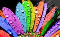 The Image Attachment of cool wallpapers for pc with colorful flower