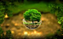 3d nature images hd with flying tree