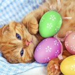 Free Picture of Best Cute Kitten Wallpaper No 1