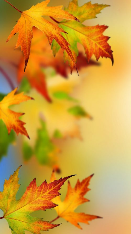 Samsung Galaxy S7 And S7 Edge Alternative Wallpapers With Autumn Leaves Hd Wallpapers Wallpapers Download High Resolution Wallpapers