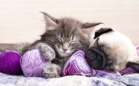 Best Cute Kitten Wallpaper No 4