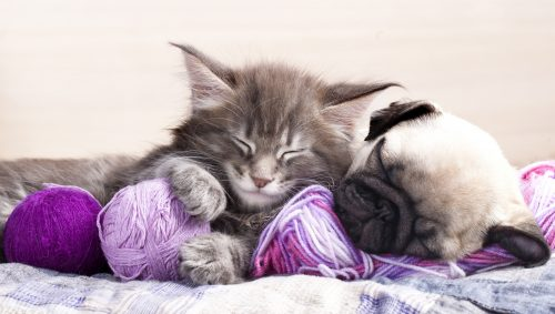 Best Cute Kitten Wallpaper No 4