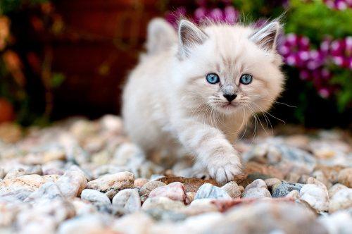 Best Cute Kitten Wallpaper No 7