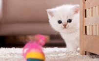 Best Cute Kitten Wallpaper No 8
