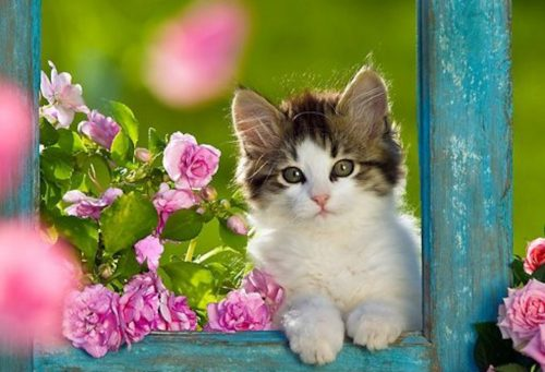 Best Cute Kitten Wallpaper No 9