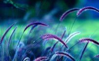 Nature Scenes Wallpaper for Macbook Pro 15 Inch