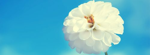 Macro photo white flower and blue sky for FB cover photo
